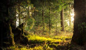 rewilding der wälder
